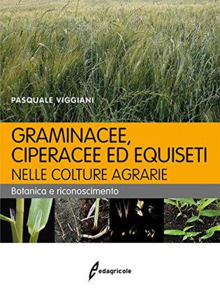 Immagine di GRAMINACEE CIPERACEE ED EQUISETI NELLE COLTURE AGRARIE - BOTANICA E RICONOSCIMENTO